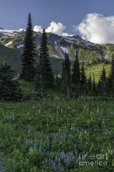 Wildflowers At Rainier Poster