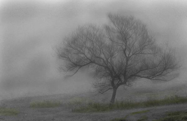 Wind Swept Tree Poster