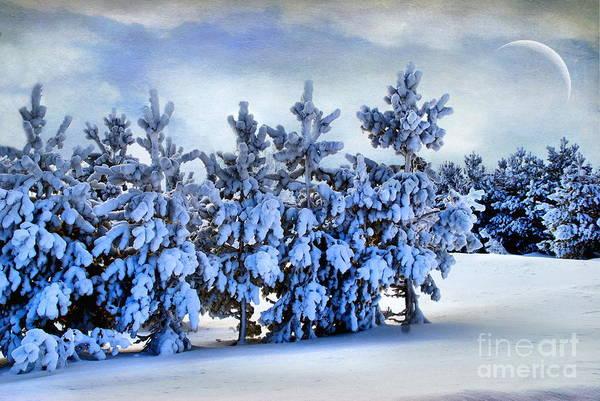 Winter Serenity  Poster