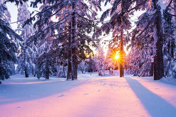 Winter Sunset Through Trees Poster