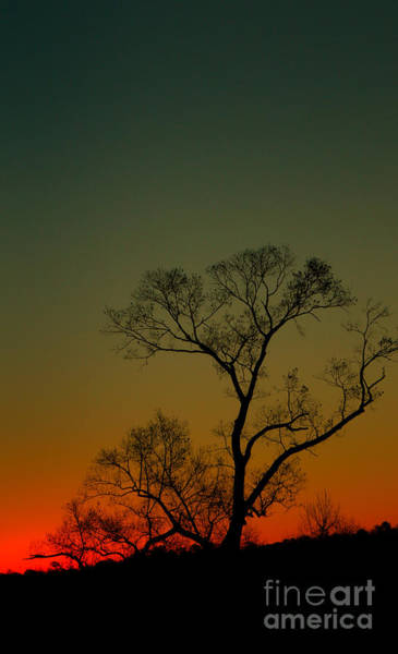 Winter Tree At Sunset Poster