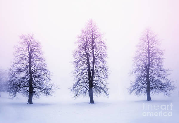 Winter Trees In Fog At Sunrise Poster