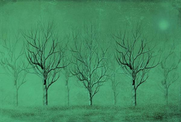 Winter Trees In The Mist Poster