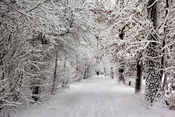 Winter Walk In Fairytale  Poster