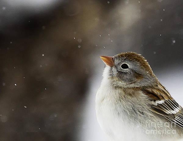 Wishing Upon A Snowflake  Poster