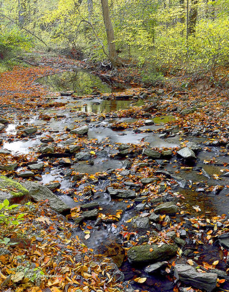 Woodland Brook In Fall Montgomery County Pennsylvania Poster