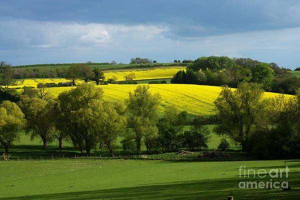 Yellow Fields In The Sun Poster