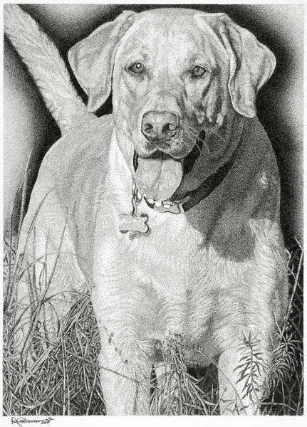 Poster featuring the drawing Yellow Lab In The Field by Rob Christensen