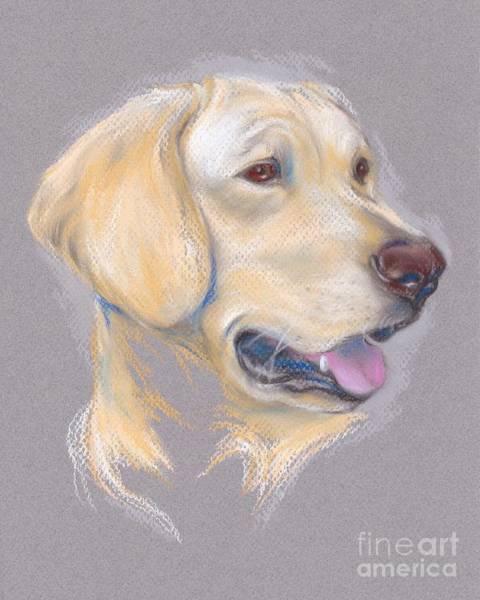 Yellow Labrador Retriever Portrait Poster