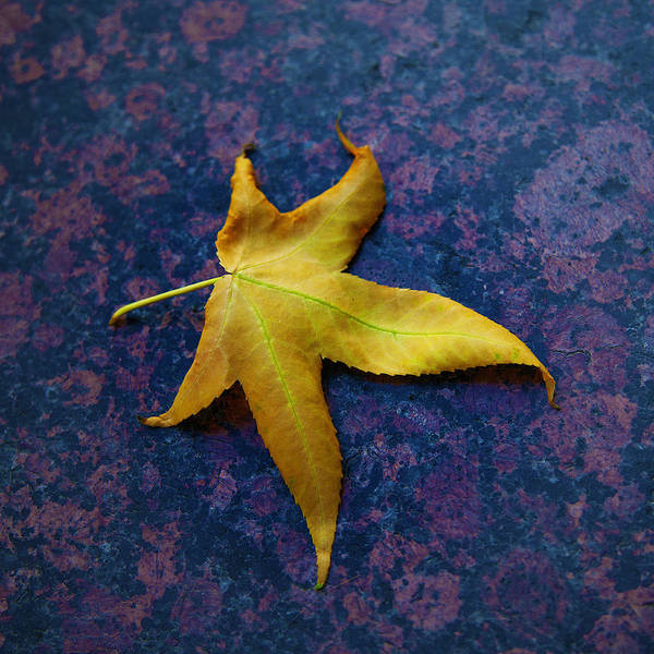 Yellow Leaf On Marble Poster