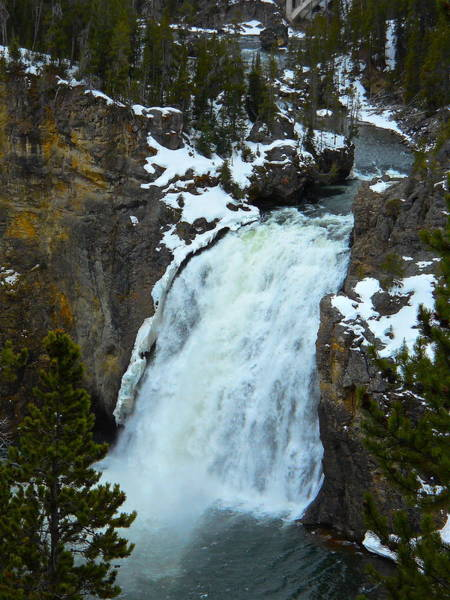 Yellowstone Upper Falls In Spring Poster