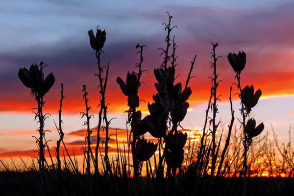 Yucca Sunset Poster
