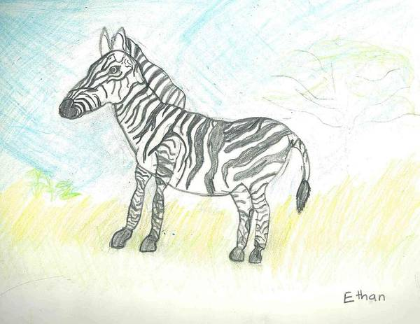 Poster featuring the drawing Zebra On The African Plains by Ethan Chaupiz