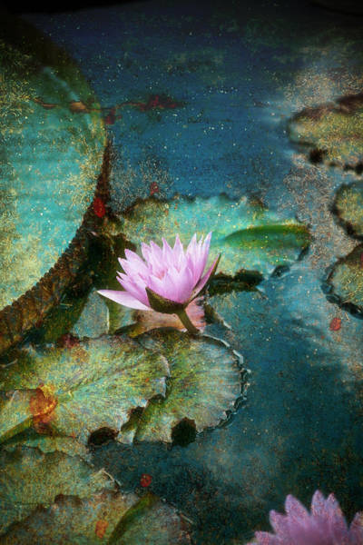 Zen Water Lily Poster
