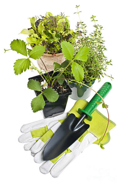 Gardening Tools And Plants Poster