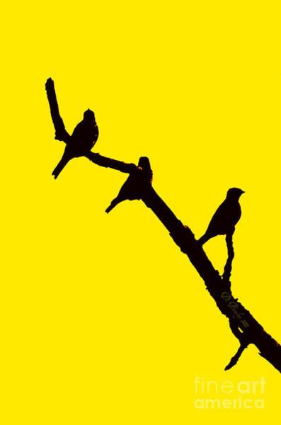 3 Birds On A Limb Poster