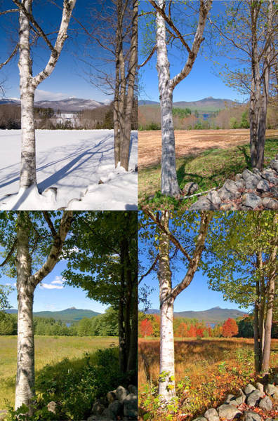 4 Seasons Chocurua Vertical Poster
