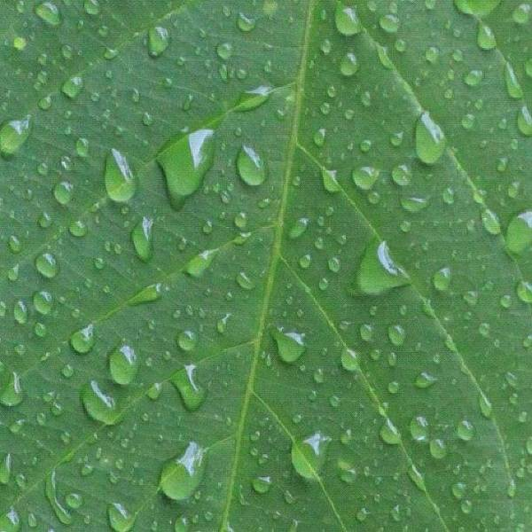 A Tree Leaf Under The Rain, By My Lens Poster