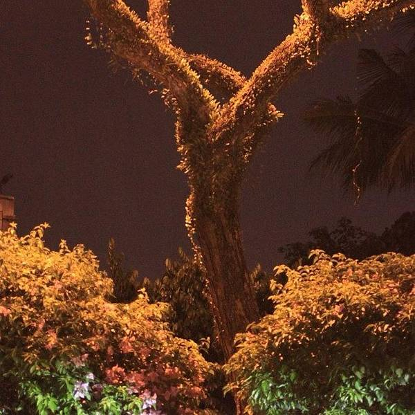 A Tree Lonely At Night, By My Lens Poster