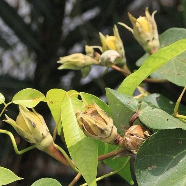 A Wild Fruit Amongst The Mangroves Poster