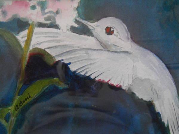 Albino Humingbird Poster