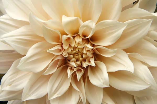 Arundel Blossom Poster