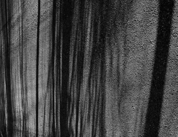 Aspen Shadows Poster