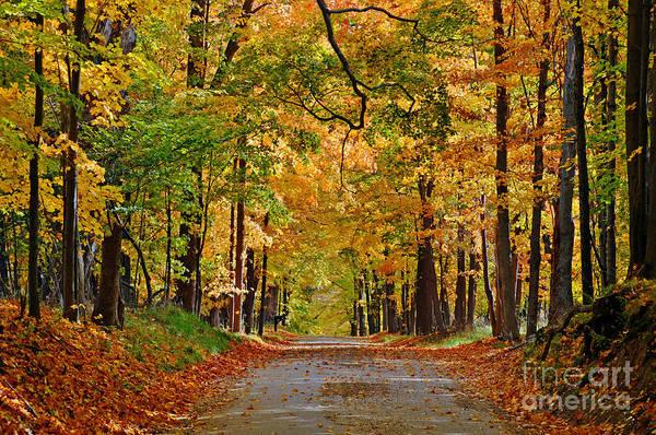 Autumn Gold Poster
