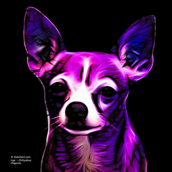 Aye Chihuahua - Magenta Poster