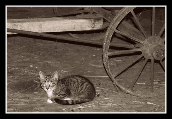 Barn Cat II Poster