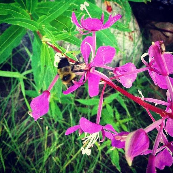 #bee #flowers #nature #instagood Poster