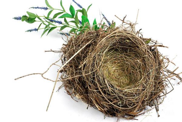 Birds Nest Poster