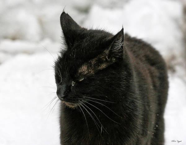 Black Cat White Snow Poster