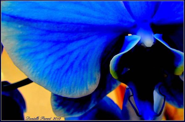 Blue Diamonds Orchids Poster