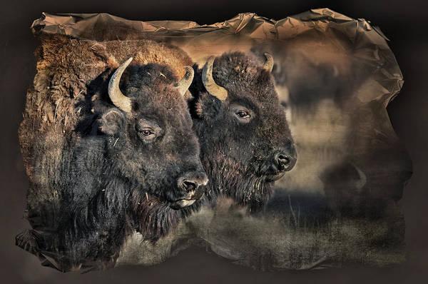 Buffalo Head Poster