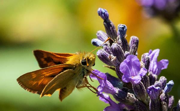 Checking For Nectar Poster