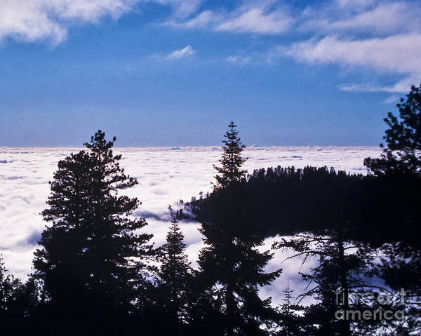 Clouds At Sequoia National Park Poster