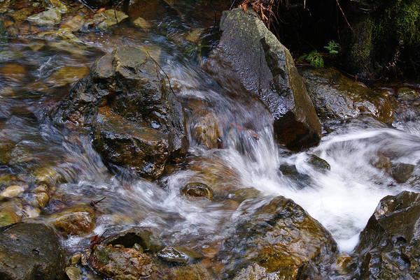 Creek Scene On Mt Tamalpais Poster