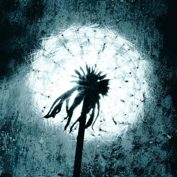 Dandelion Art 6 Poster