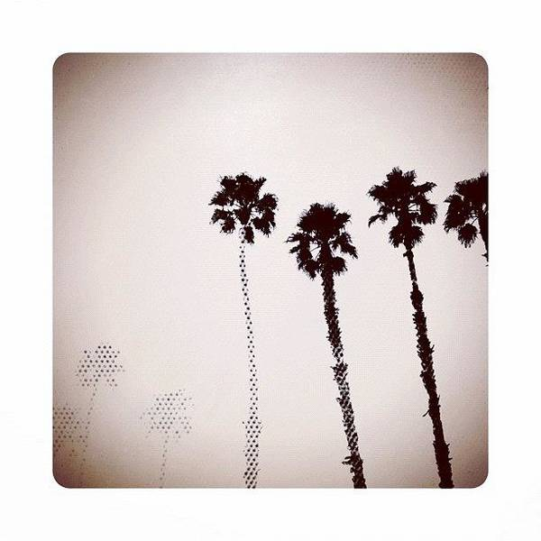 Dotty Palms Today In #calistoga Poster