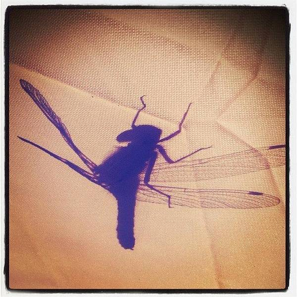 #dragonfly #tent #shadow #beautifulday Poster