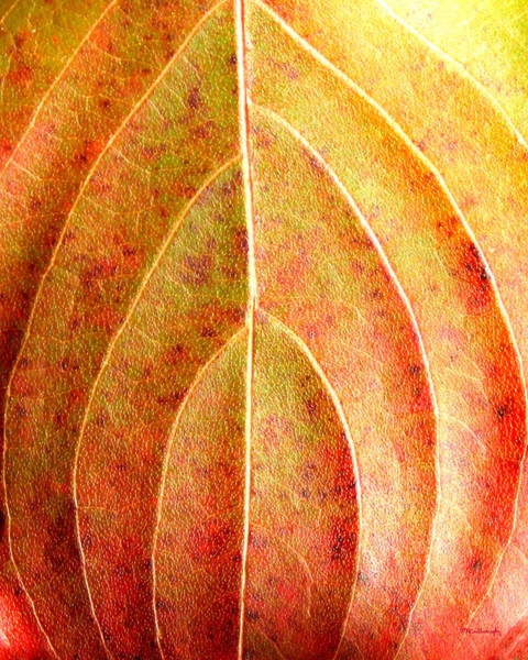 Fall Leaf Upclose Poster