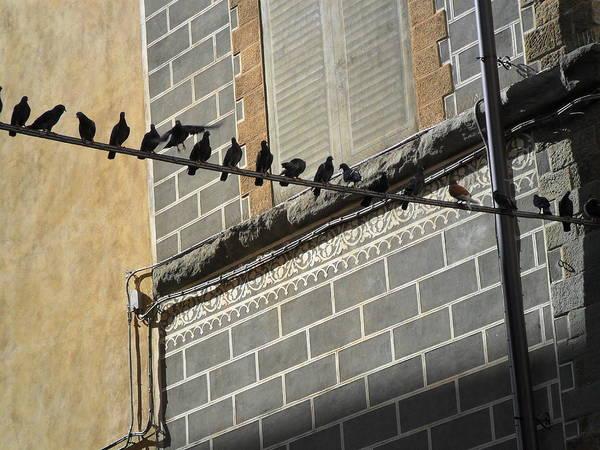 Florentine Pigeons Poster