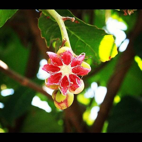 Flower Or Fruit?? Another Wonder Of Poster