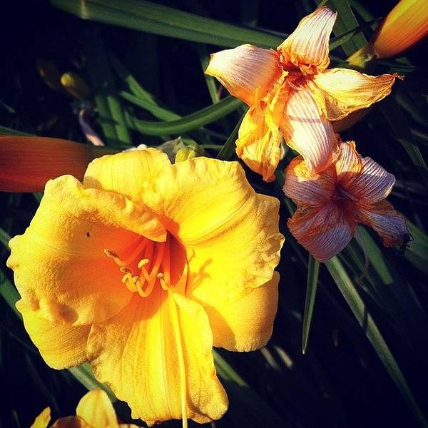 #flowers #flower #beautiful #instagood Poster