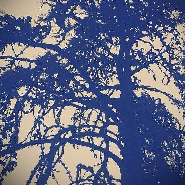 #forest #tree #beautiful #dark Poster
