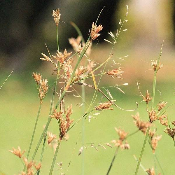 Garden Grass From A Different Angle, By Poster