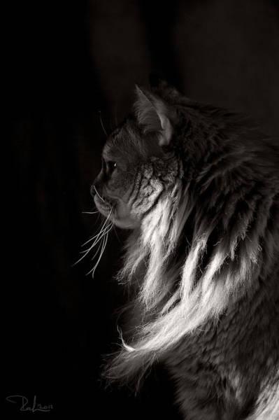 Ghiga In The Dark Poster