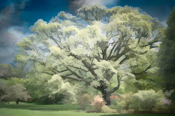 Giant White Oak Spring Poster
