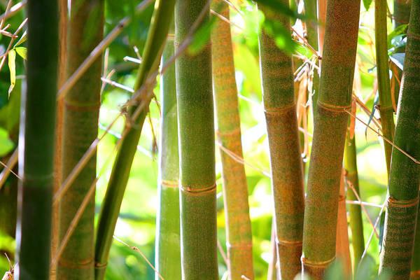 Golden Bamboo Poster